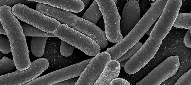 'We can still contain this superbug'