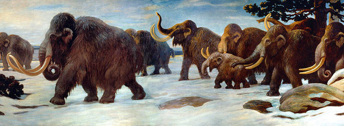 A (woolly) mammoth find